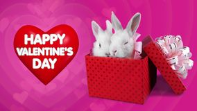 A funny romantic couple of rabbits in present box, Happy Valentines Day concept stock video footage