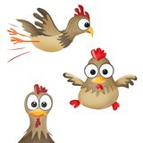 Funny rooster Royalty Free Stock Photo