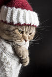 Funny sad cat in a Christmas hat of Santa Claus Stock Image