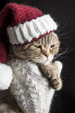 Funny sad cat in a Christmas hat of Santa Claus Stock Images