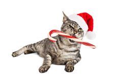 Funny Santa Cat With Candy Cane Stock Photography