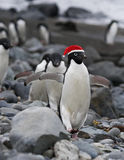 Funny Santa Penguin Royalty Free Stock Images