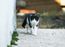 Scared cute kitten sneaks down the path on the street. Funny scared cute kitten sneaks down the path on the street Royalty Free Stock Photos