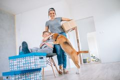 Funny scene with beagle dog - family move in new apartment Royalty Free Stock Image