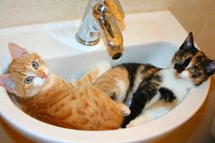 Funny scene - two kittens sleep in a washbasin. It is humorous photo with comedy concept. Funny scene - two kittens sleep in a washbasin. One kitten is tabby stock image