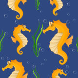 Funny sea horse. Seamless background Royalty Free Stock Images