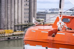 Funny seagull bird sitting on a lifeboat... Royalty Free Stock Photo