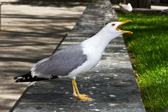 Funny seagull Stock Images