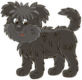 Funny and shaggy dog Affenpincher royalty free stock photography