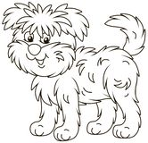 Funny and shaggy dog Affenpincher royalty free stock image