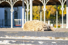 Funny shaggy doggie lying in the street Royalty Free Stock Photos