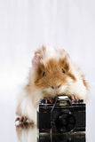 Funny shaggy photographer. Royalty Free Stock Images