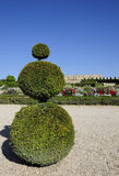 Funny shaped tree for artwork of garden Royalty Free Stock Photo