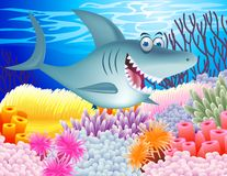 Funny shark Royalty Free Stock Image