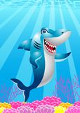 Funny Shark cartoon Royalty Free Stock Photography