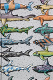 Funny Shark Wallpaper Stock Image