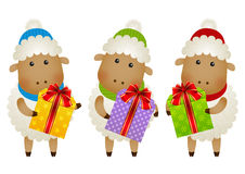 Funny sheep with gift boxes Stock Photos