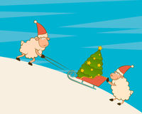Funny sheep heaves up sledges with fir-tree Stock Photos