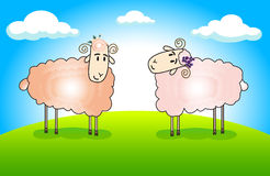 Funny sheep. Two funny sheep in the meadow against the blue sky with clouds Royalty Free Stock Images