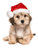 Funny sitting Christmas Havanese puppy dog. Funny sitting Bichon Havanese puppy dog in a Christmas hat looking at camera - Isolated on a white background Stock Images