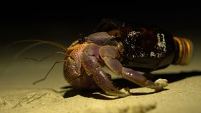 Funny Situation. Big Adult Hermit Crab Obtained New Home in Broken Glass Bottle. Ecological Sample of the Global Litter stock footage