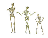 Funny skeletons. A group of posed skeletons vector illustration