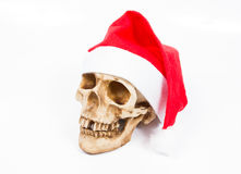 Funny  skull in hat Santa Claus  on white background. Royalty Free Stock Photography