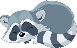 Funny sleeping cartoon raccoon Royalty Free Stock Images