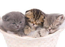 Funny sleeping kitties in basket Stock Photo