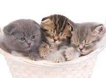 Funny sleeping kitties in basket Stock Photo