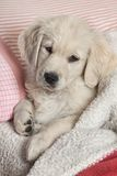 Funny small dog Stock Photos