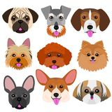 Small dog face set with tongue out. Funny small dog face set with their tongues sticking  out Royalty Free Stock Photos