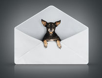 Funny small dog in post cover royalty free stock photography