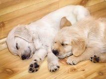 Funny small dog Stock Photo