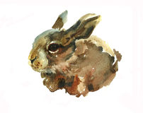 Funny small hare original watercolor illustration. Funny small hare original  watercolor Easter illustration on white background Royalty Free Stock Photography