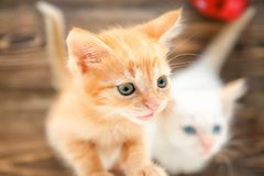 Funny small kittens indoors stock image