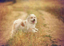 Funny smiling dog in summer Royalty Free Stock Photography