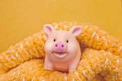 Funny smiling rubber pig toy stands in a woolen openwork scarf against yellow background. Smiling rubber piggy stands in a woolen openwork scarf against the stock photography