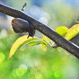 Funny snail background. Snail crowling on tree's branch Stock Photography