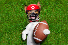 Funny soccer dog. Soccer jack russell dog holding a rugby ball and laughing out loud with red sunglasses outdoors on meadow grass at the field Royalty Free Stock Images