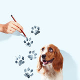 Funny spaniel dog Stock Images