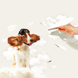 Funny spaniel dog Stock Image