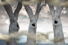 Funny Spooky Trees. Three trees  with funny scary faces in a misty forest Stock Photos