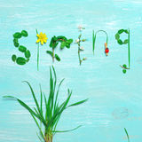 Funny spring background Royalty Free Stock Photo