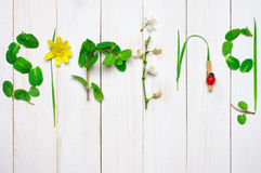 Funny spring background Royalty Free Stock Photography