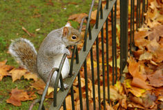 Funny Squirrel Stock Images