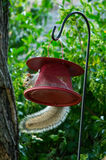 Funny squirrel. A squirrel hold on a red bird feeder Stock Photos