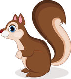 Funny squirrel cartoon Royalty Free Stock Photography