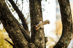 Funny squirrel in the forest Royalty Free Stock Image