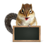 Funny squirrel hold blank blackboard on white Stock Image